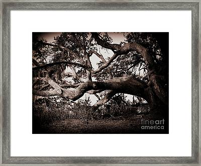 Gnarly Limbs At The Ashley River In Charleston Framed Print