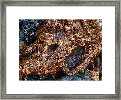 Gnarly Roots  Framed Print by Nancy Mueller
