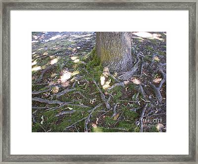 Framed Print featuring the photograph Gnarly by Suzanne McKay