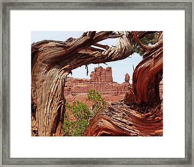 Framed Print featuring the photograph Gnarly Tree by Alan Socolik