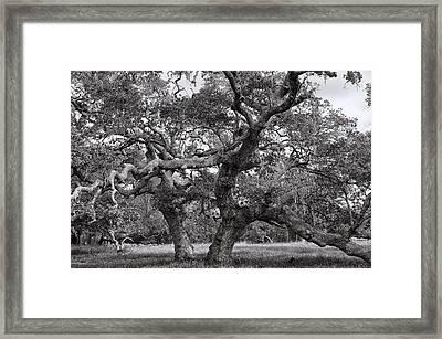 Gnarly Tree  Framed Print