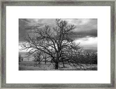 Framed Print featuring the photograph Gnarly Tree by Sennie Pierson