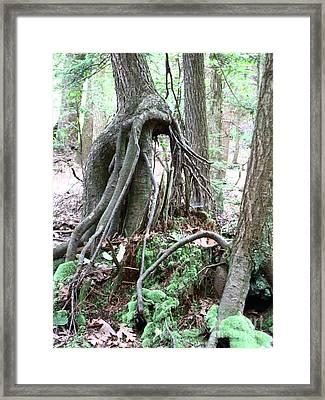 Gnome Framed Print by Melissa Stoudt