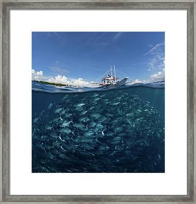 Go Diving? Framed Print