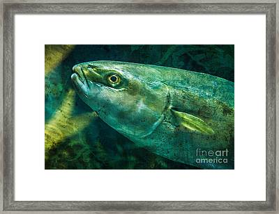 Go Fish 2 Framed Print by Pam Vick
