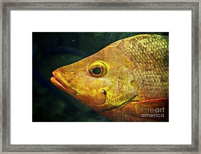 Go Fish Framed Print by Pam Vick