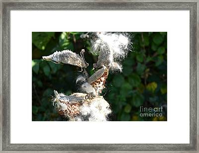 Go Forth  Framed Print by Andrew Hagerty