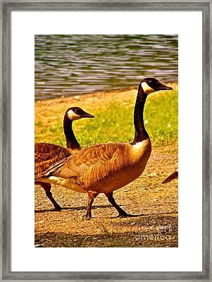 Go Geese Framed Print