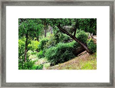 Go Hike Framed Print