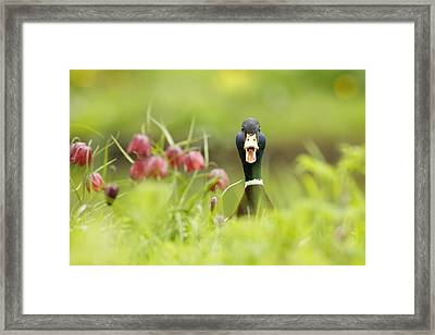 Go Home Duck You're Drunk Framed Print by Roeselien Raimond