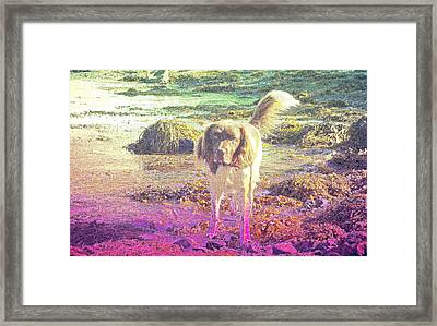 One Day Wil Will Go Hunting For Something Valuable  Framed Print
