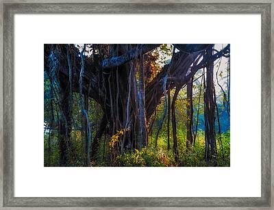 Goan Banyan Tree. India Framed Print by Jenny Rainbow