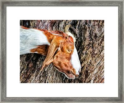 Framed Print featuring the photograph Goat 3 by Dawn Eshelman