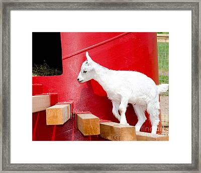 Kid's Play Framed Print