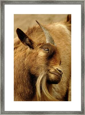 Goat Framed Print by Maria Mosolova/science Photo Library