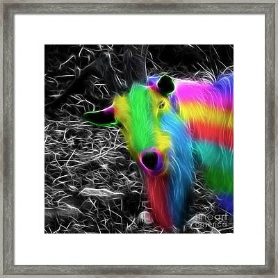 Goat Of Colour Framed Print by Jo Collins