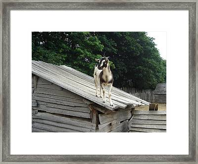 Framed Print featuring the photograph Goat On The Roof by Kerri Mortenson