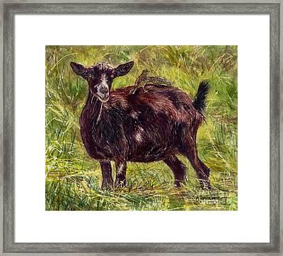 Goat Piggybackers Framed Print
