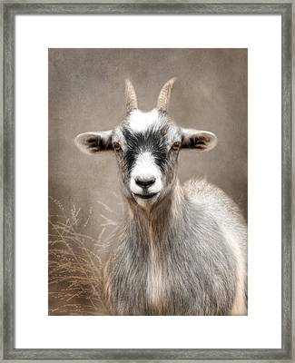 Goat Portrait Framed Print