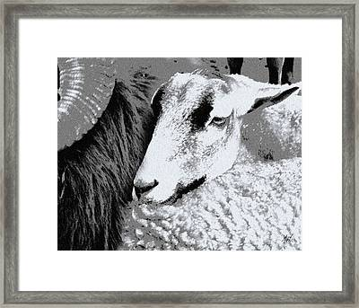 Goat Snuggled In With Family Framed Print by Michele Avanti
