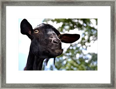 Goat Framed Print by Tara Potts
