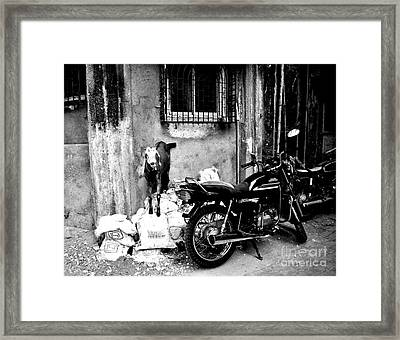 Goatercycle Black And White Framed Print