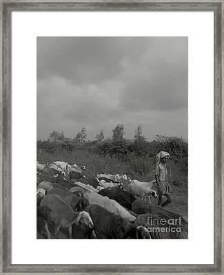 Goatherd's Delight Framed Print