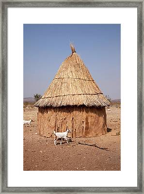 Goats And Hut In Himba Village, Opuwo Framed Print