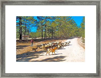 Goats Cross The Road With Tarahumara Boy As Goatherd-chihuahua Framed Print