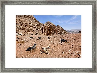 Goats In Front Of The Monastery At Petra In Jordan Framed Print by Robert Preston