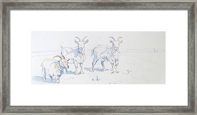 Goats Framed Print by Mike Jory