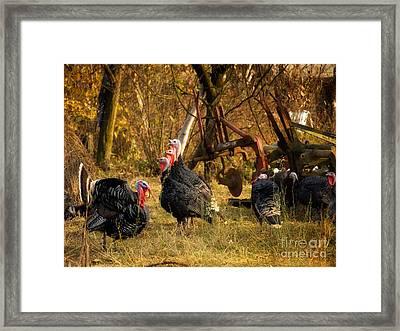 Gobbler Harem Framed Print by Sinisa Botas