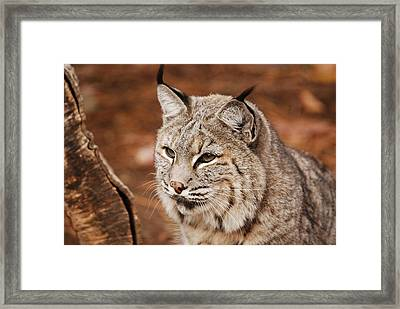 God I'm Handsome Framed Print by Lori Tambakis