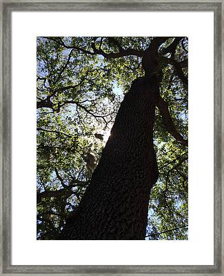 Goddess Tree Framed Print