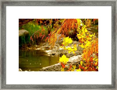 Framed Print featuring the photograph God's Amazing Colors by David  Norman
