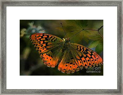 Gods Beauty Framed Print by Beverly Guilliams