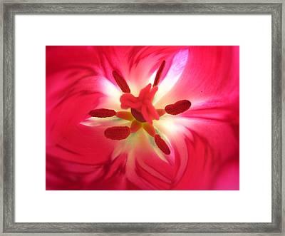 God's Floral Canvas 2 Framed Print