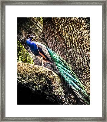 Gods Heavenly Creatures Framed Print by Karen Wiles