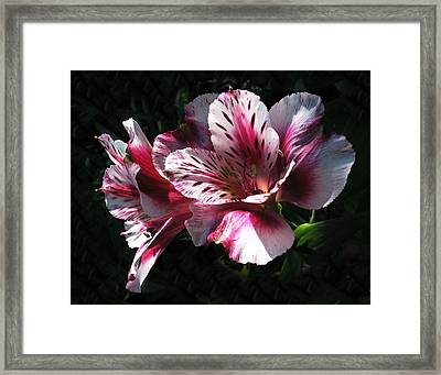 God's Laugh Framed Print