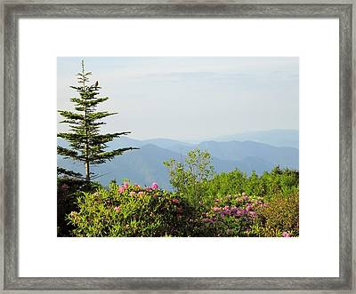 God's Wonders Framed Print