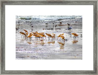 Godwits At San Elijo Beach Framed Print