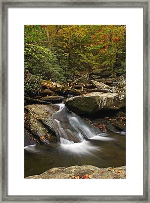 Goforth In The Fall Framed Print by Gregory Cook
