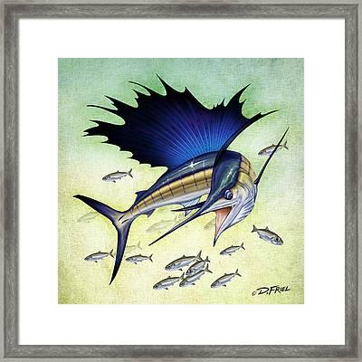 Goggle Eye Sailfish Framed Print