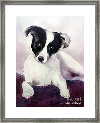 Goggles The Stray Dog Framed Print