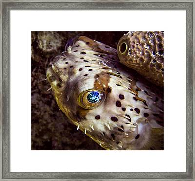 Goggly Eye Framed Print by Jean Noren