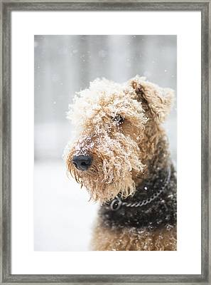 Dog's Portrait Under The Snow Framed Print