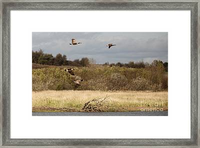 Goin' South Framed Print