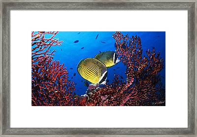 Going For A Swim Framed Print by Cole Black