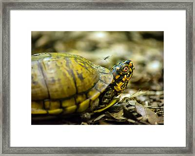 Going For Blood Framed Print by Jon Woodhams