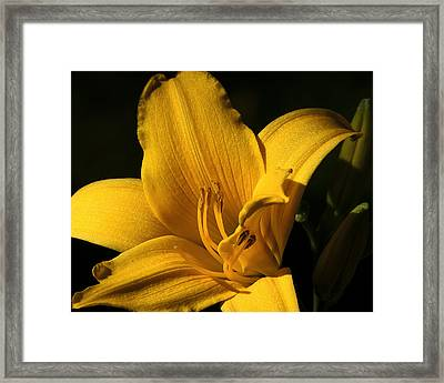 Going For Gold Framed Print